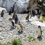 Grădina zoologică de la Schonbrunn, cea mai veche din lume (GALERIE FOTO)