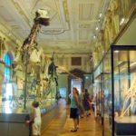 Vizită la Muzeul de istorie naturală din Viena