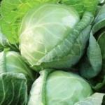 Varza este una dintre cele mai vechi legume, datând din anul 1600.