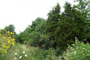 copaci si flori