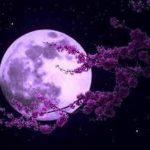 Oamenii ar putea locui pe Lună până în 2030.