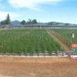 Într-o fermă din Chile se va cultiva cannabis.