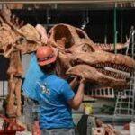 La un muzeu din New York a fost expus scheletul celui mai mare dinozaur din lume.