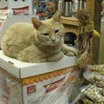 O pisică a fost aleasă primar al unei localităţi din Alaska.