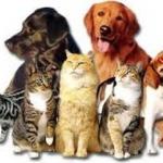 Cum să-ţi transformi animalele de companie într-o afacere profitabilă