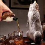 Cea mai scumpă bere din lume este ambalată într-un animal împăiat.