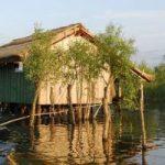 În Delta Dunării se întâlnesc două plante carnivore, otrățelul de baltă și aldrovanda.