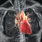 Cercetătorii americani au creat prima inimă funcțională.
