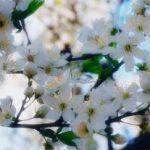 20 martie – Echinocțiul de primăvară 2016