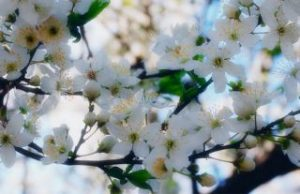 primavara-frumoasa(1)