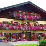 Cele zece flori de grădină care vă pot ajuta să vă vindeţi casa