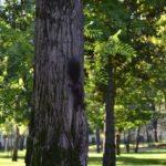 Zeci de arbori din municipiul Arad vor fi tăiați