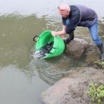 1.000 de pui de cegă au fost eliberați în râul Mureș