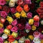 Află care sunt florile preferate ale locuitorilor din județul Arad