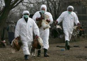 gripa-aviara