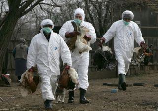 DSP Arad. Sfaturi pentru prevenirea îmbolnăvirii prin gripă aviară