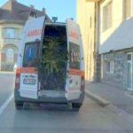 O lume nebună. O ambulanță transportă brazi de Crăciun