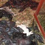 Iepurașii de la Târgul de Primăvară, omorâți de câini