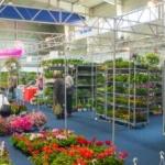 Expo Arad pregătește Târgul Primăverii