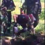 Mânz căzut în fântână, salvat de pompieri
