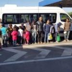 Migranţi descoperiţi într-un lan de porumb