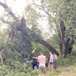 Mii de copaci din Pădurea Ceala, doborâţi de furtună