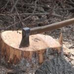 USR susține că PSD naționalizează dezastrul din păduri