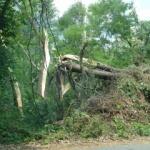 Marin Lupaș: Și Pădurea Ceala este neglijată...