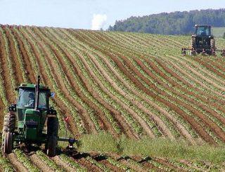 Aradul, județul în care se vând cele mai multe terenuri agricole