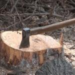 Arboriada lui Falcă: După 13 ani, primarul încă disprețuiește spațiile verzi