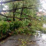 Furtuna a făcut victime. O femeie lovită de un brad a murit la Moneasa