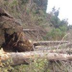Pagube produse de furtună în pădurile din județul Arad