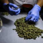 Droguri descoperite în casele unui bărbat din Lipova