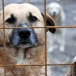 Continuă capturarea câinilor fără stăpân de pe străzi, în municipiul Arad