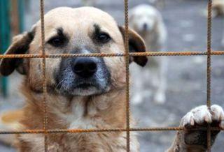 Târg de adopție canină, organizat în Parcul Chinologic