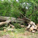 Peste 25.000 de arbori rupţi în Pădurea Ceala în urma furtunii din iunie 2017