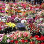 Flori, produse handmade și cărți, la Târgul Primăverii de la Expo Arad