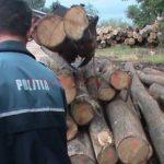 Firmă din Livada, cercetată pentru tăieri ilegale de arbori