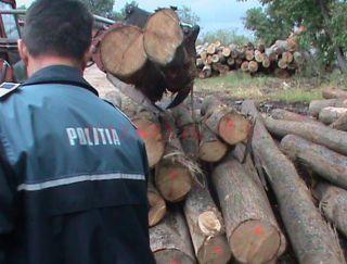 Evaziune fiscală la un ocol silvic privat. 36 de persoane sunt cercetate