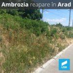 USR Arad cere lucrări de combatere a ambroziei