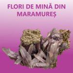 Expoziție de mineralogie la Complexul Muzeal Arad