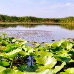 Delta Dunării poate fi explorată virtual pe Google Maps