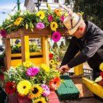 """Festivalul """"FlorAr"""" ediția a doua, la Arad. PROGRAM"""
