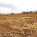 """Primăria Ghioroc înfiinţează o """"pădure a Centenarului"""", cu 1918 stejari"""