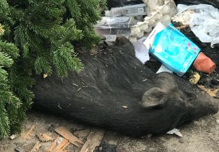 """Animal mort, aruncat la gunoi. Retim: """"Deșeurile nu se mai pot arunca la gramadă"""""""