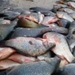 Peste trei tone de peşte din Italia şi Spania, confiscate la Vama Nădlac