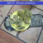Traficanți de droguri din județul Arad, arestați