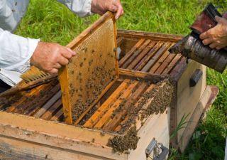 Albinele din județul Arad, decimate de poluarea chimică
