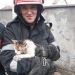 Orice viață contează! Pompierii arădeni au salvat o pisică dintr-o fântână