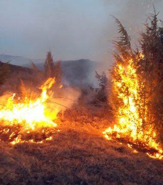 Zeci de incendii de mirişti în județul Arad. Sute de hectare au fost afectate